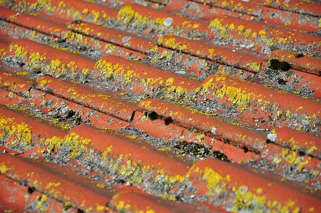 Can You Paint Terracotta Roof Tiles Terracotta Roof