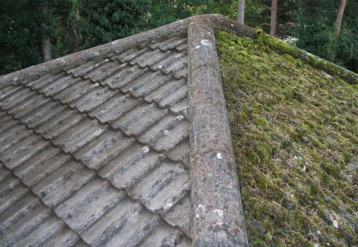 Moss Lichen Removal