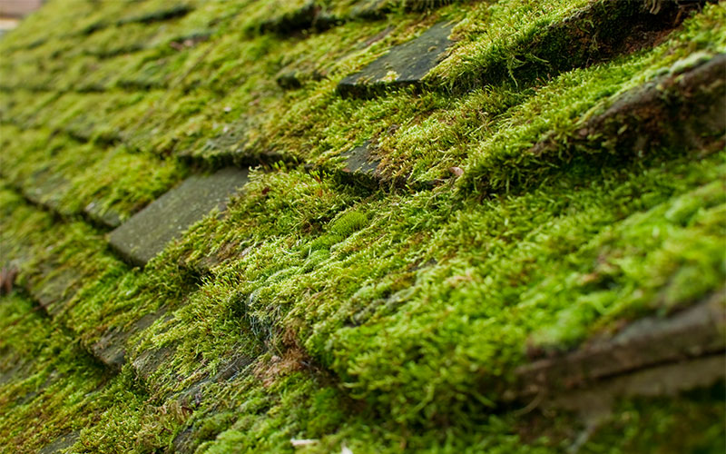 Lichen, Mould And Moss On Roofs
