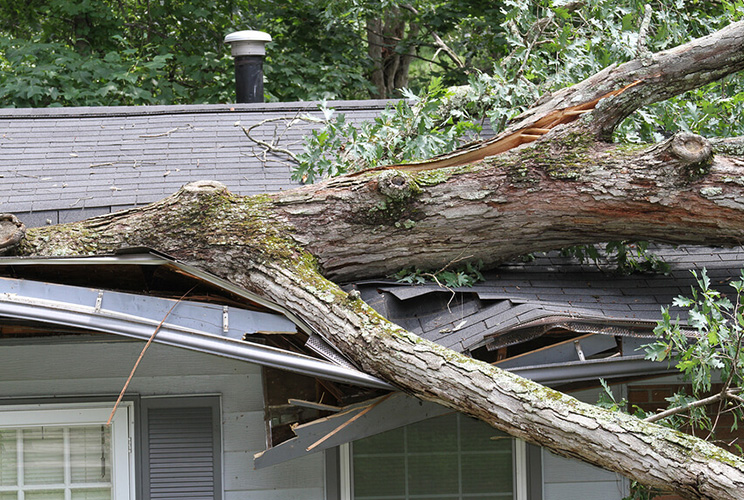 Tree Damaged Roof